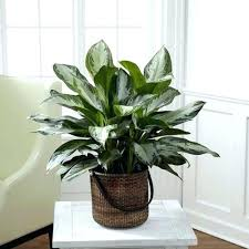 best indoor plants low light best indoor plants for low light and clean air home interior pro