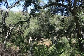 Botanic Garden Santa Barbara Santa Barbara Botanic Garden Nobody Hikes In La
