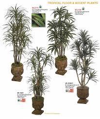 floor plants home decor tropical floor plants for home decor indoor tropical floor accent
