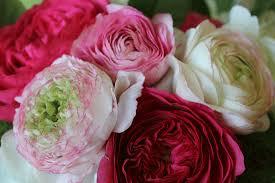 www flowers flowers