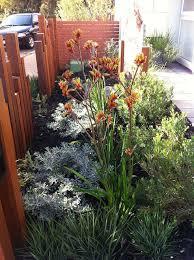 25 trending australian native garden ideas on pinterest