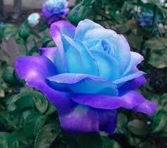 Blue And Purple Flowers 3638 Best U003e U003c Flowers U003e U003c Images On Pinterest Flowers