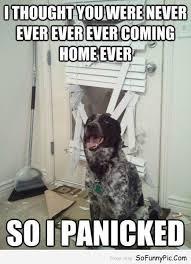Dog Lover Meme - 15 funny dog memes for dog lovers things i love pinterest