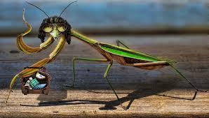 Mantis Meme - praying mantis howard stern by preemiememe on deviantart