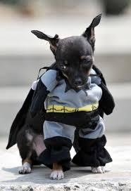 Funny Dog Costumes Halloween 104 Bat Animals Images Animals Bats Funny