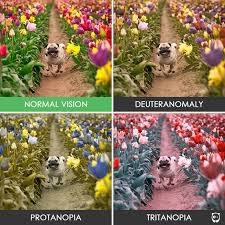 How To Prevent Color Blindness Colorblindness And Graphic Design Martin Communications
