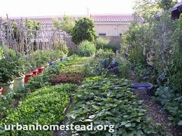 Backyard Farms 27 Best Backyard Farm Images On Pinterest Gardening Backyard