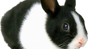 Cute Black And White Wallpapers by Cute Black Bunny Hd Wallpaper 16 Free Wallpaper Hdblackwallpaper Com