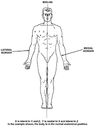 Picture Of Anatomical Position In The Anatomical Position The 01 Introduction And Terminology