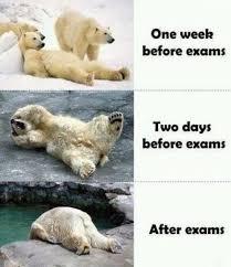 Final Exam Meme - describe how you re feeling with a meme weddingbee cuteness