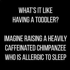 Funny Toddler Memes - 787 best being a mom images on pinterest hilarious quotes