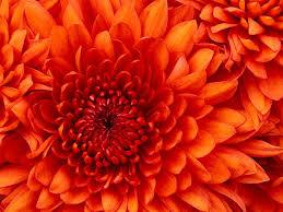 Life Of A Flower - llewellyn xavier llewellynxavier twitter