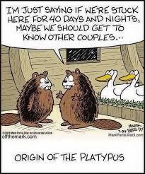 Platypus Meme - origin of the platypus imgur