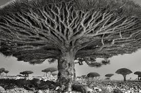 beth moon photographs the world s oldest trees daily mail