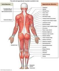 Human Anatomy Muscle Grays Anatomy Hand Print Anatomical Hand Wrist By Vintagewarehouse