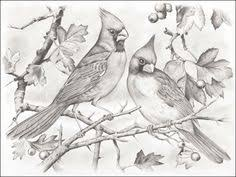 black capped chickadee coloring page homeschool pinterest