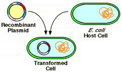 recombinant dna technology problem set