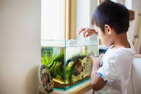 how much and how often should i feed my fish