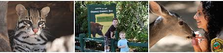 orange county zoo petting zoo picnic areas