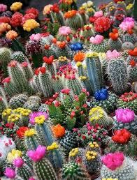 Cactus Garden Ideas Small Cactus Garden Design Home Design Ideas And Pictures