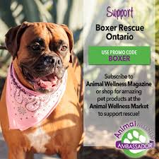boxer dog for adoption home page website