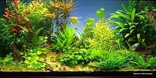 Aquascaping Shop Aquarium Von Dennis ölschläger Aus Esslingen Copyright U0026 Design By