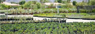 Landscape Nurseries Near Me by California Desert Nursery Wholesale Nursery In The Coachella
