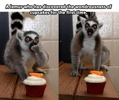Lemur Meme - 15 lemur memes that will make your wednesday so much better i