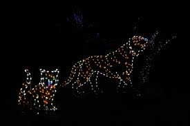 Washington Dc Zoo Lights by 50 Photos Of Zoolights At The National Zoo In Washington D C