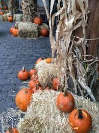 New York Botanical Garden Pumpkin Carving by Collection Botanical Gardens Halloween Pictures Ray Villafane
