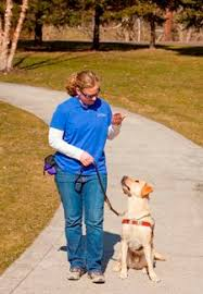 Dogs Helping Blind People Guide Dogs For The Blind Positive Reinforcement Dog And Doggies