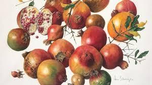 abundance seeds pods and autumn fruits kew