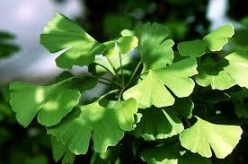 tumbuhan herbal salah satu resep untuk menjadi pria perkasa cara