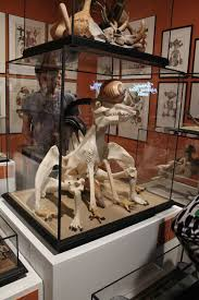 The Cabinet Of Jan Svankmajer Monster Brains Metamorphosis Fantasy Visions In Starewitch