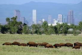 Colorado Wildlife Tours images Wildlife viewing at colorado 39 s rocky mountain arsenal wildlife jpg