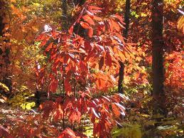 native american healing plants appalachian folk medicine holli richey psychotherapy u0026 herbal