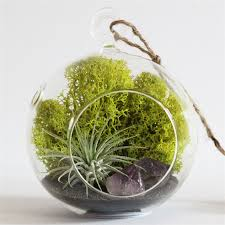 well designed terrarium and gardening kits design galleries