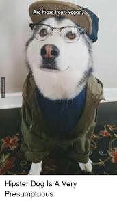Dog With Glasses Meme - list of synonyms and antonyms of the word hipster dog meme