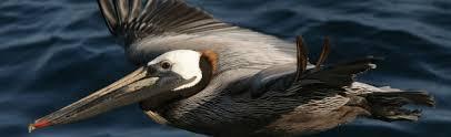 fish u0026 wildlife service migratory bird program conserving