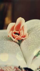 book wallpaper cotton rose on book android wallpaper free download