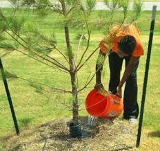 up with trees how to care for trees