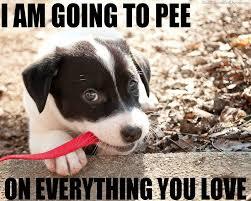 Frowning Dog Meme - overwhelmed dog no meme dog meme puppy meme what is love mans