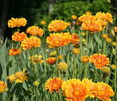 22 best flowers for sun heat tolerant flowers for containers