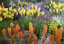 South African Wild Flowers - clanwilliam wild flower show