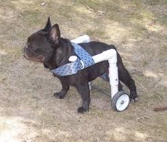 Wheels For Chair Legs Best 25 Dog Wheelchair Ideas On Pinterest Foster Puppies Build