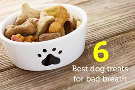 6 best dog treats for bad breath oxyfresh