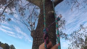 learning how to climb a tree with just rope