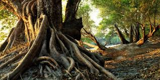 earth why some trees evolved to live underground