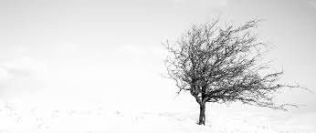 snow tree photo madd