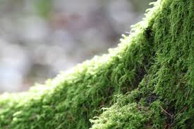 free images tree forest grass moss green evergreen